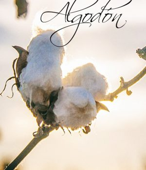 Diferencias entre Algodón Orgánico vs Algodón Convencional