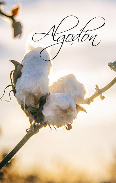 ▷ Diferencias entre Algodón Orgánico vs Algodón Convencional  ✅